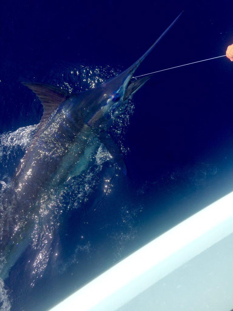 Wicked Wahine Blue Marlin